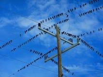 Rebanho dos pássaros no fios bondes foto de stock