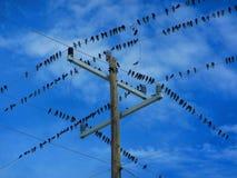 Rebanho dos pássaros no fios bondes imagens de stock