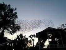 Rebanho dos pássaros no meio do parque Fotografia de Stock