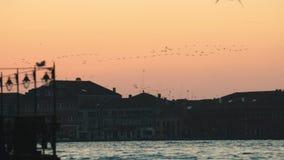 Rebanho dos pássaros que voam sobre o céu cor-de-rosa do por do sol Fundo da construção histórica e de um porto vídeos de arquivo
