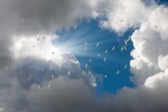 Rebanho dos papagaios brancos Fotografia de Stock