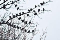 Rebanho dos pombos imagens de stock