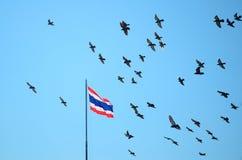 Rebanho dos pombos no céu azul, bandeira de Tailândia no mastro fotos de stock