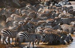 Rebanho grande das zebras que estão na frente do rio kenya tanzânia Parque nacional serengeti Maasai Mara Imagem de Stock Royalty Free