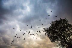 Rebanho selvagem dos pássaros no céu nebuloso fotos de stock