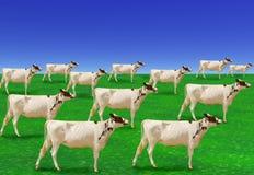 Rebanho surreal das vacas brancas Fotografia de Stock