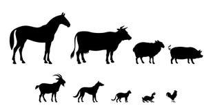 Rebanhos animais Imagens de Stock Royalty Free