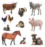 Rebanhos animais da colagem isolados no branco fotos de stock royalty free