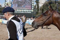 rebanhos animais da exposição de 124 ? e Argentina rural Imagem de Stock Royalty Free