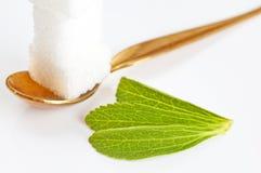 Rebaudiana do Stevia, sustentação para o açúcar imagem de stock