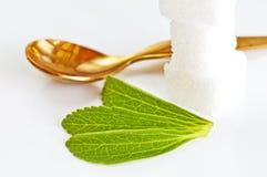 Rebaudiana do Stevia, sustentação para o açúcar imagens de stock
