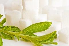 Rebaudiana do Stevia, sustentação para o açúcar fotografia de stock