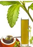 Rebaudiana do Stevia, sustentação para o açúcar foto de stock