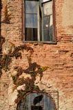 Rebbergsteiger auf Backsteinmauer Stockfotos
