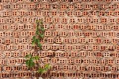 Rebe auf alter Backsteinmauer lizenzfreies stockfoto