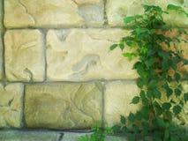 Rebe auf der Steinwand Stockfoto