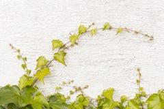 Rebe auf der Wand Lizenzfreies Stockbild