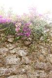Rebe auf einer alten Wand Stockbild