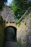 Rebe deckte Treppenhaus Irland ab Stockfoto