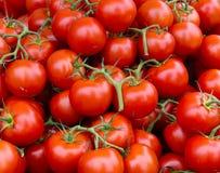 Rebe gereifte Tomateblöcke Lizenzfreie Stockfotografie