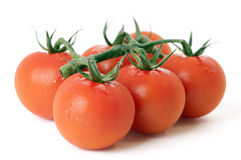 Rebe-Tomaten Stockfoto