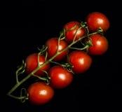 Rebe tomatoe Lizenzfreie Stockfotografie