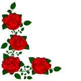Rebe von roten Rosen Lizenzfreie Stockfotografie