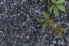 Rebe von wilden Trauben auf einem Hintergrund des Schutts stockfotos