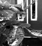 Rebecca 36 Immagine Stock Libera da Diritti