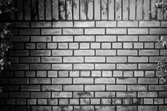 Rebecca 36 Fotografia Stock Libera da Diritti