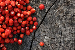 Rebellious wild strawberry Royalty Free Stock Photography