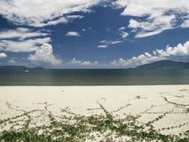 Reben auf der Küste Lizenzfreies Stockbild
