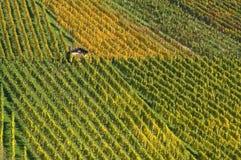 Reben in den Herbstfarben Stockfotografie