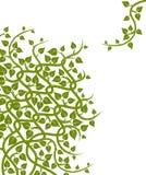 Reben und Blätter Stockfoto