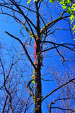 Reben und Bäume Lizenzfreie Stockbilder