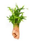 Rebento da planta da fortuna com mão humana como raizes Fotos de Stock Royalty Free