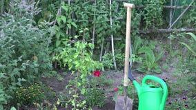 Rebento pequeno da árvore, ferramenta da pá e lata molhando no jardim Zumbido para fora 4K vídeos de arquivo