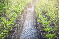 Rebentos da planta em uns potenciômetros prontos para plantar fotos de stock royalty free