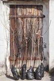 Rebentos de árvores de fruto antes de plantar Imagem de Stock