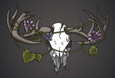 Rebirth. Deer skull with vines and flowers entangled in the antlers. Vines and flowers are both separate and easily removed Stock Photo