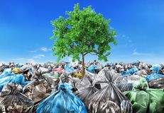 Rebirth concept. A tree grows from a pile of garbage. Recycle Stock Photos