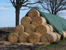 Rebitamentos da palha, grampeados na natureza, fora Foto de Stock