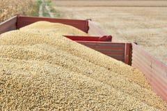 Reboque de trator com feijão da soja Foto de Stock