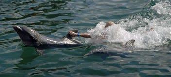 Reboque do golfinho Imagens de Stock Royalty Free
