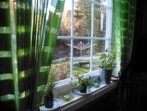 Rebord de fenêtre avec les herbes mises en pot avec la vue sur le jardin images libres de droits