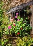 Rebord de fenêtre fleurissant Images libres de droits