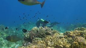 Rebreather diver on a coral reef. With plenty fish stock video footage