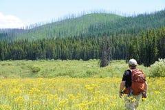 Rebrota dos incêndios florestais velhos no parque nacional de geleira Fotos de Stock