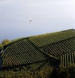 Rebterrassen-Grün der Meerblick-Schweiz Waadt Lavaux lizenzfreie stockfotos