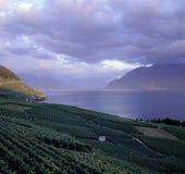 Rebterrassen-Grün der Meerblick-Schweiz Waadt Lavaux stockfotos